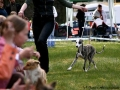 "Gella ""Haute Couture Romantika"" at her first show, Jonava 2007 - Baby BOB (almost 5 months)"