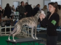 "Gella ""Haute Couture Romantika"" at Vilnius Winner INT 2009 - CAC + R.CACIB"