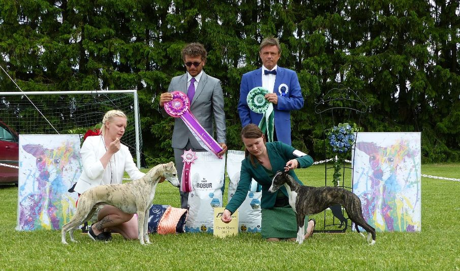BOB and BOS at Finnish Whippet Club Open Show 2017. (c) Anita Sandquist